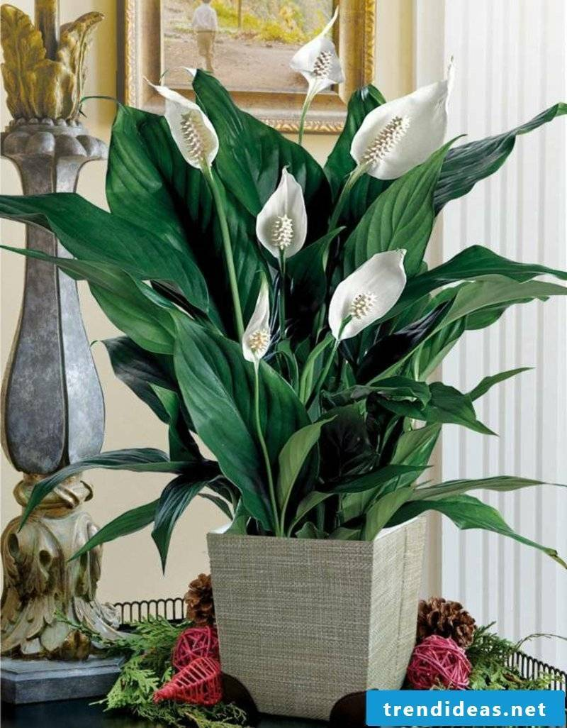 decorative lily