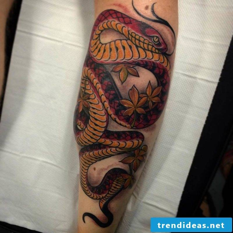 Snake tattoo is drawn multicolored
