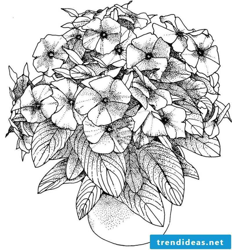 Flowers coloring pictures for free