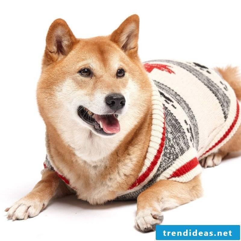 Dog sweaters knit advanced