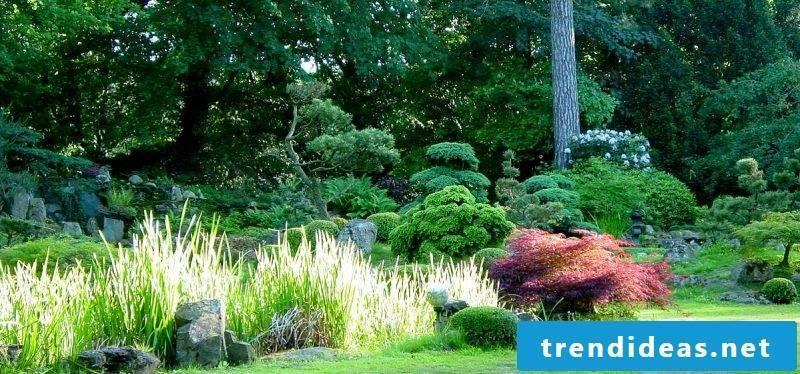 Japanese rock garden plant species