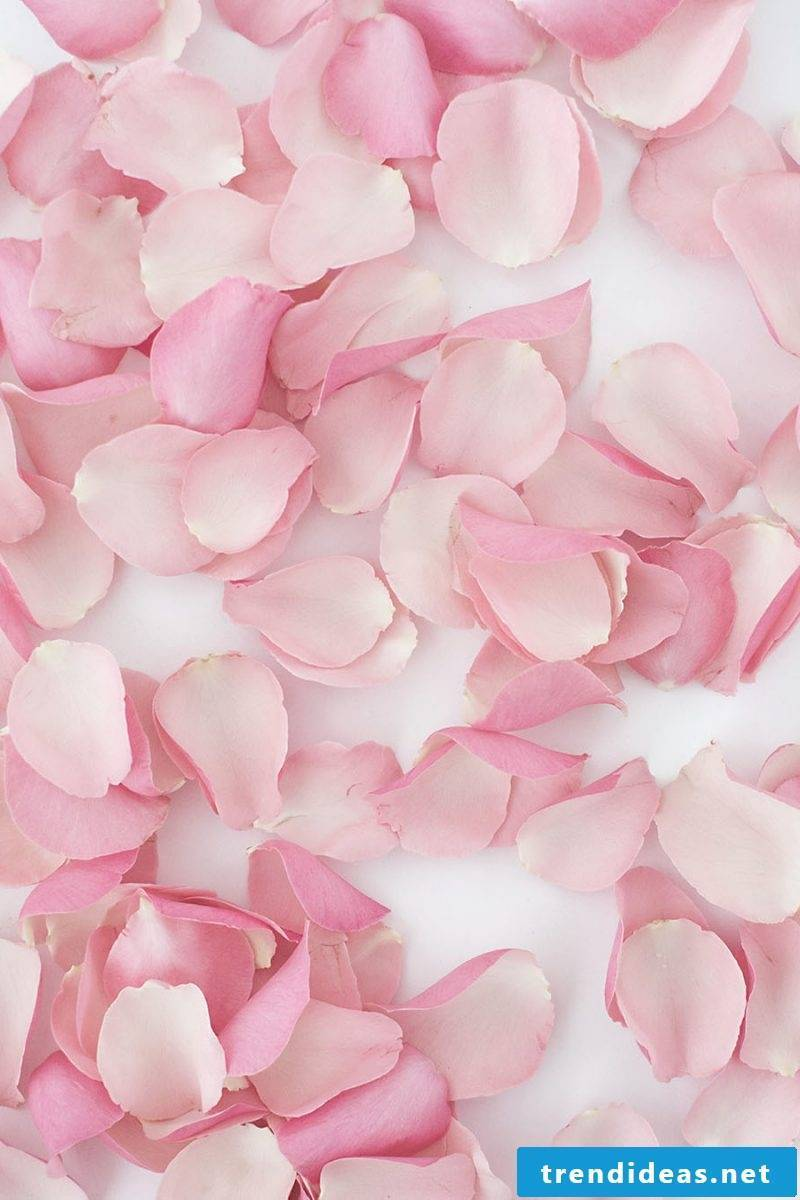 Paper blossom wall with rose petals - instructions in 3 steps