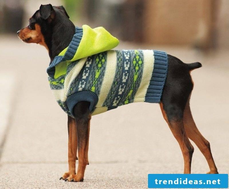 Dog sweater knit hoody