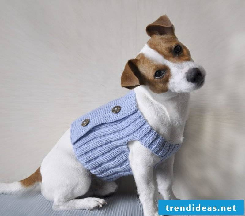 Knit dog sweaters and decorate with buttons