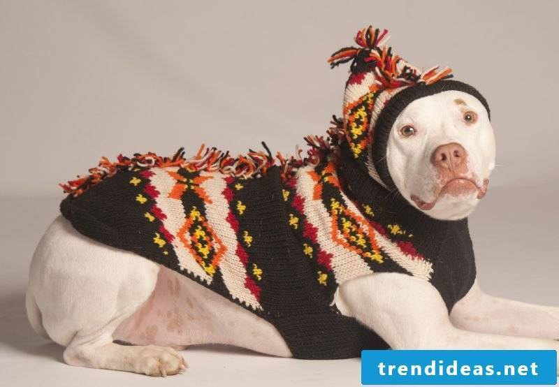 Dog sweaters knit with our patterns
