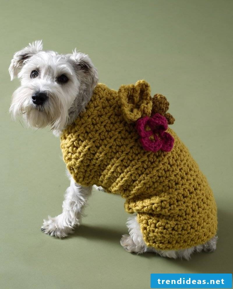 Knit dog sweaters and decorate with knitted flowers