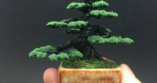 A piece of Japan for home - bonsai styles and care instructions