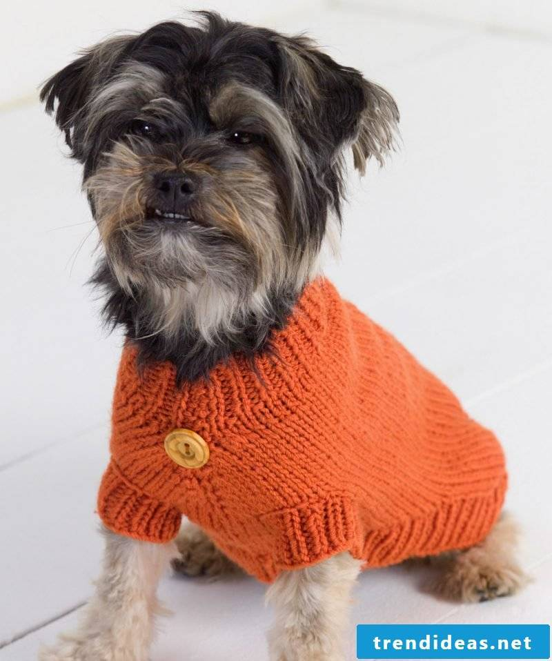 Creative ideas for knitting dog sweaters