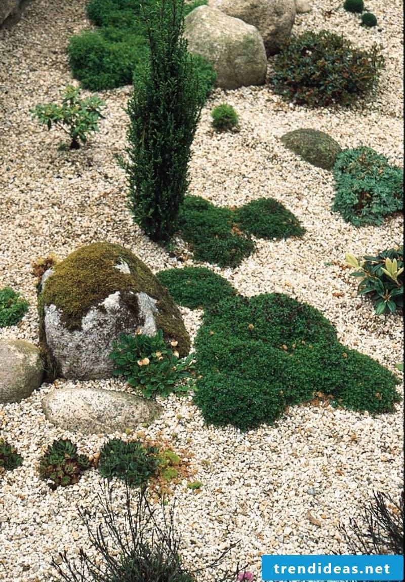 Create gravel garden and plant with grasses