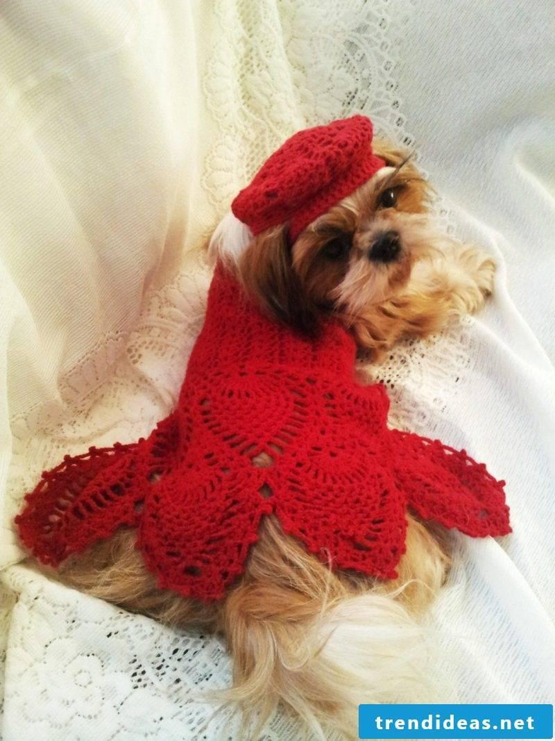 Knit dog sweaters and make a stunning dress