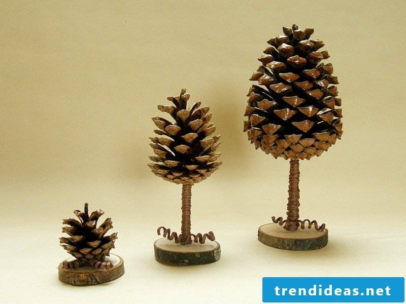Tinker with pine cones three trees