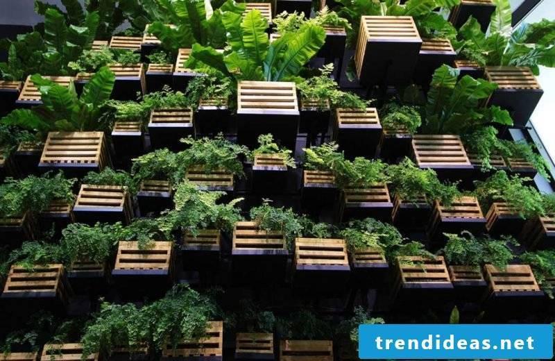 planting greens