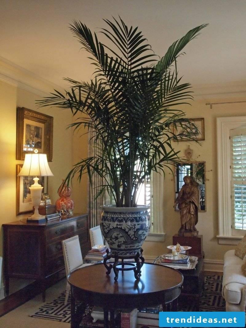 Palm tree living room