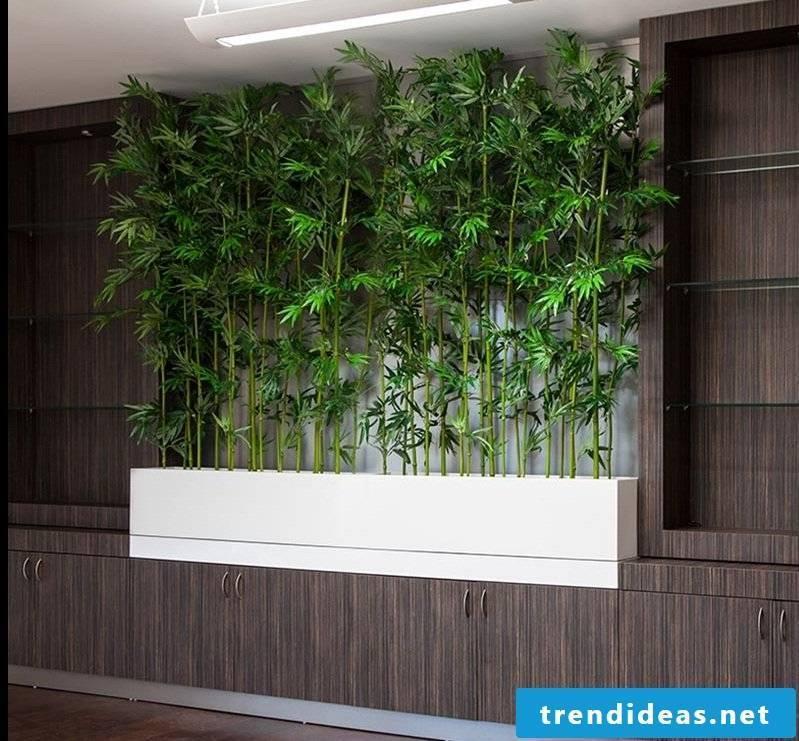 Palm tree bamboo