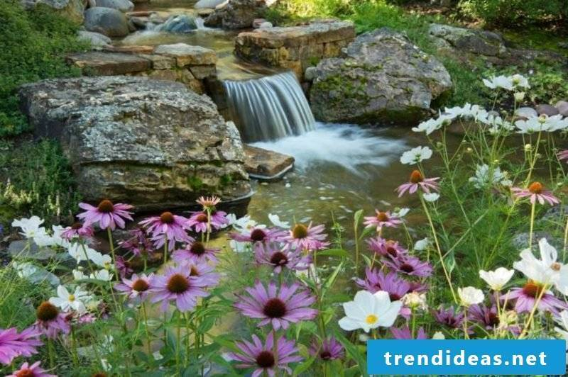 Creek with waterfall and beautiful summer flowers