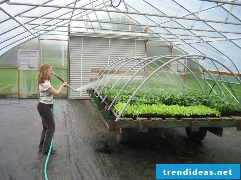 Greenhouse itself build helpful tips