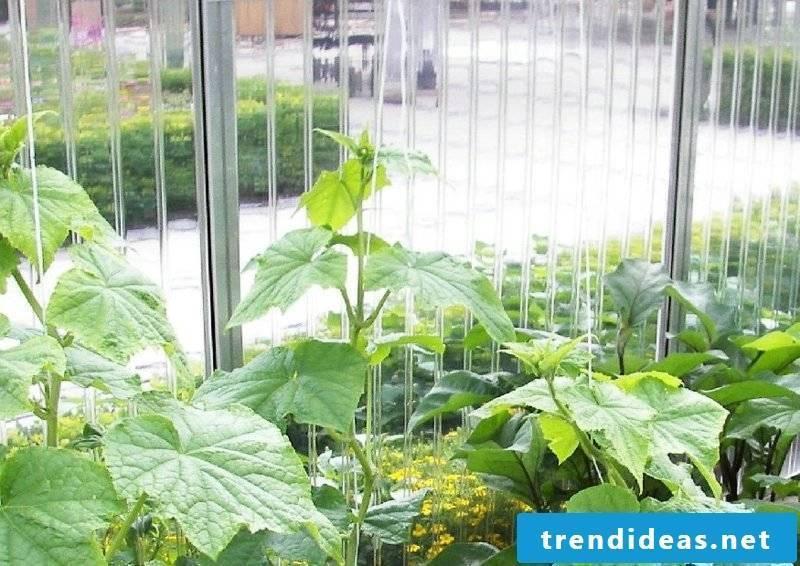 Greenhouse build yourself preparation