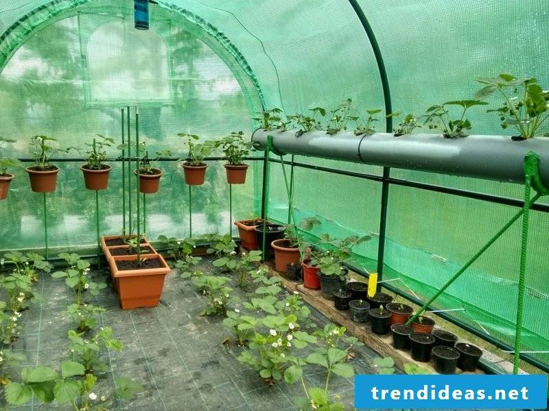 Greenhouse simple construction manual
