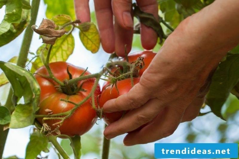 Greenhouse build garden benefits