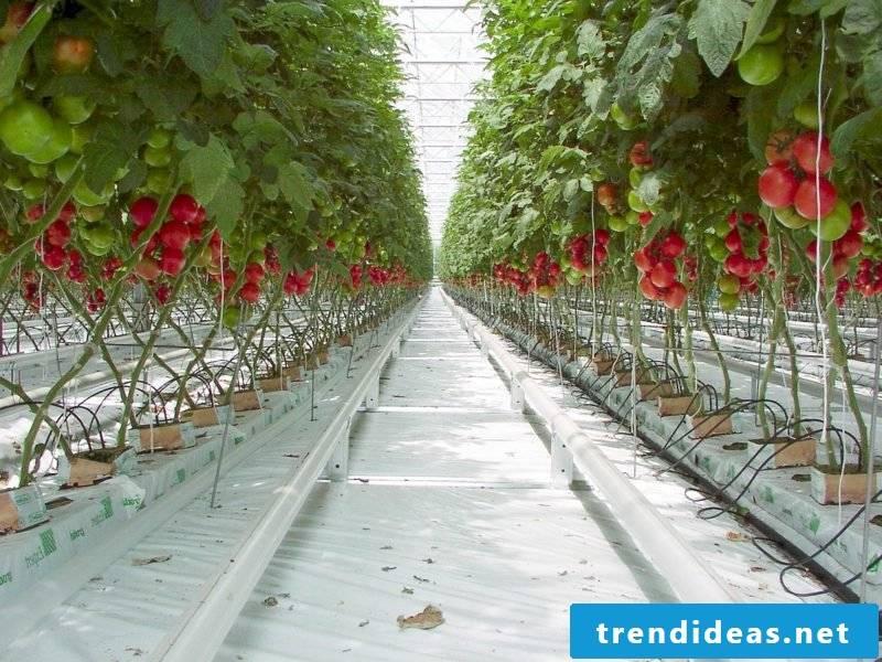 DIY ideas garden greenhouse building by yourself