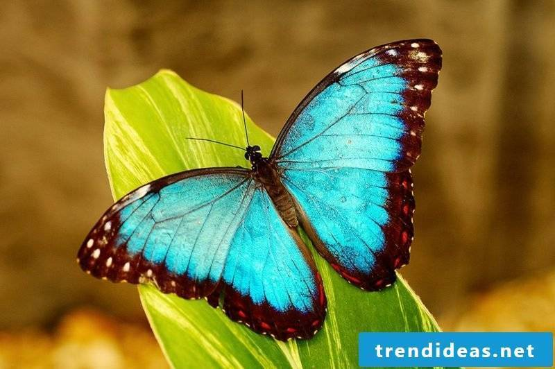 Butterfly meaning