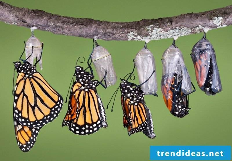 Butterfly meaning cocoons