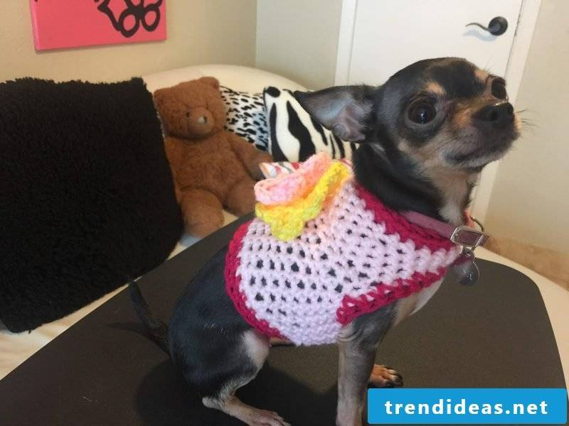 Knit dog sweater: instructions for beginners
