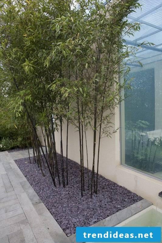 buy bamboo in tub