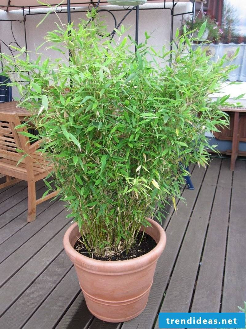 order bamboo in tub online