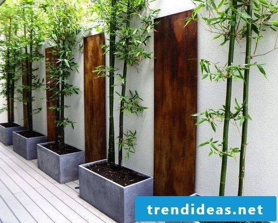 bamboo in bucket price