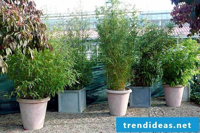 sell bamboo in bucket