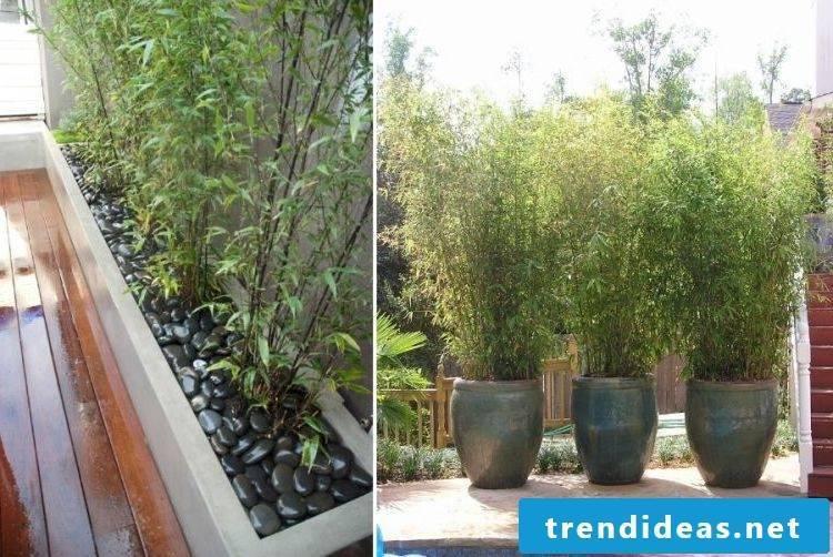 bamboo in tub big