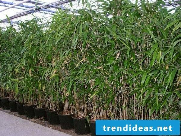 Bamboo in the bucket cost