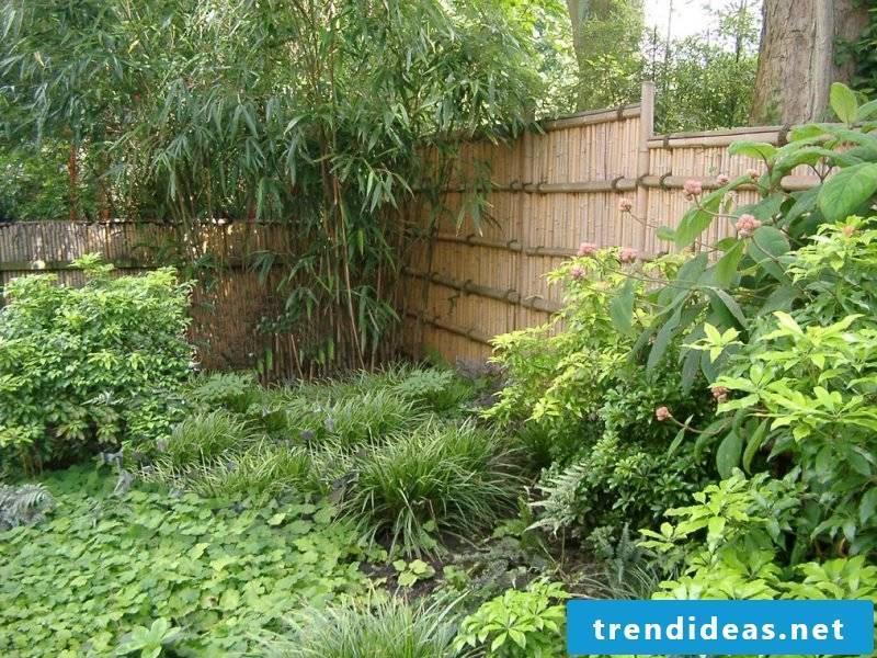 Bamboo in the bucket in the garden