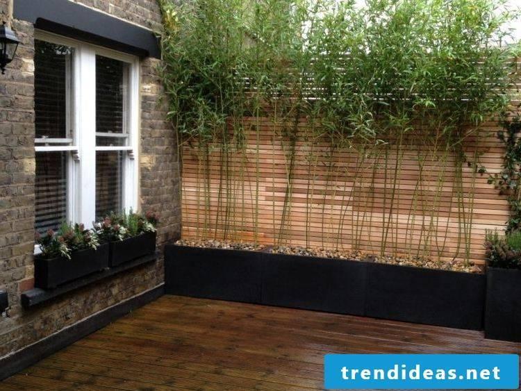 Bamboo in the tub garden