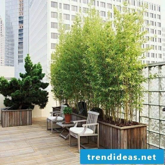 Bamboo in bucket on balcony