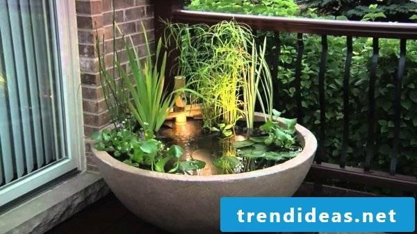 Bamboo in a tub mini