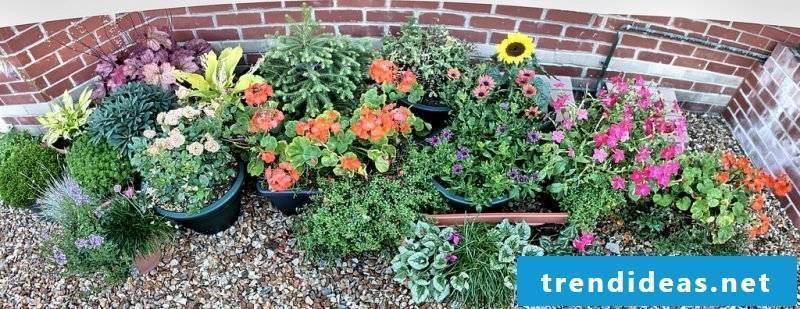 Create Kisgarten: Find out which plants fit