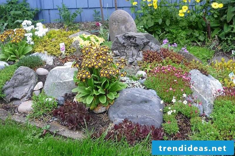 Follow our tips to make sure you plant a flowerbed with stones