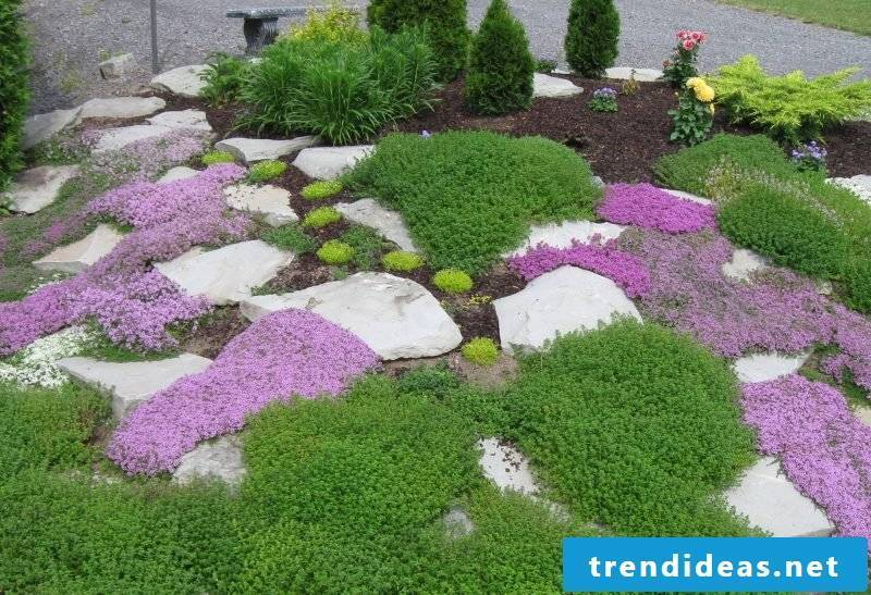 Creating a stone bed: Inform yourself of our tips which plants are suitable for the rock garden