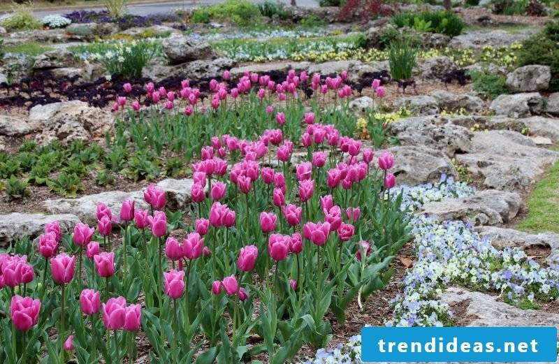 Lay a stone bed and plant the garden with purple flowers
