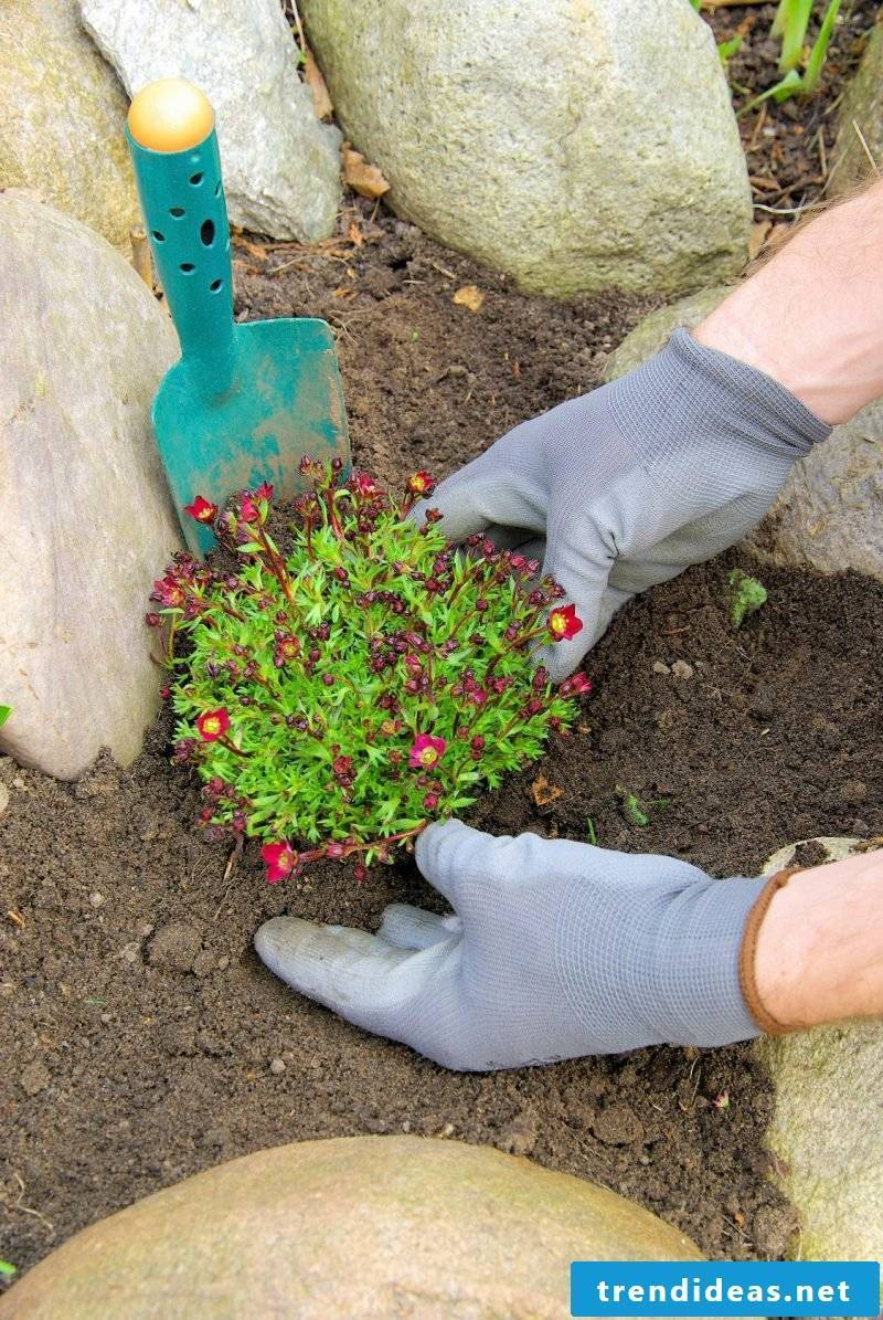 Creating a flower bed with stones: planting a flower bed with stones