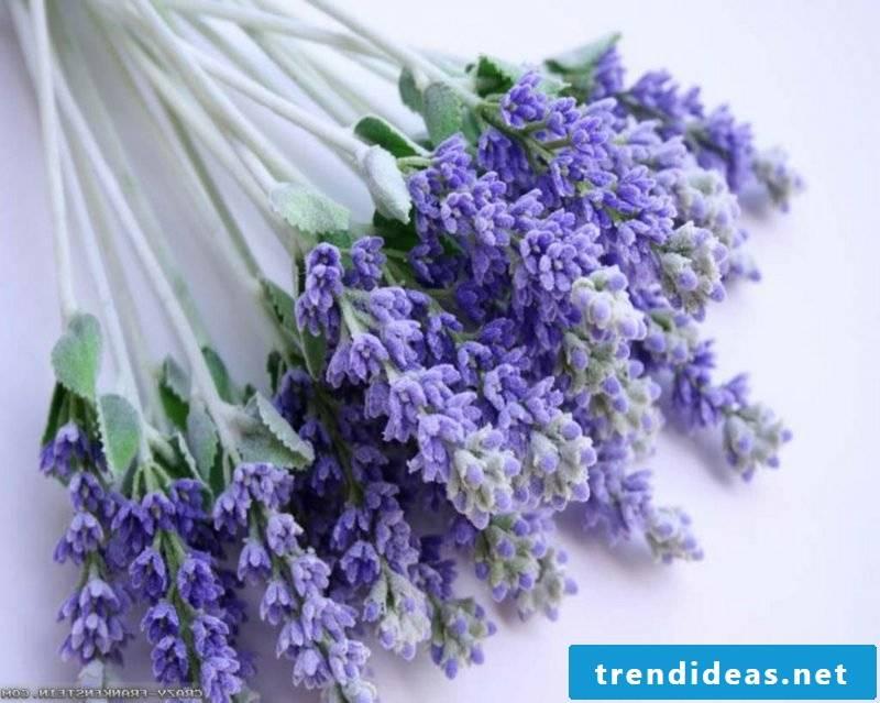 Lavender delicate flowers in purple