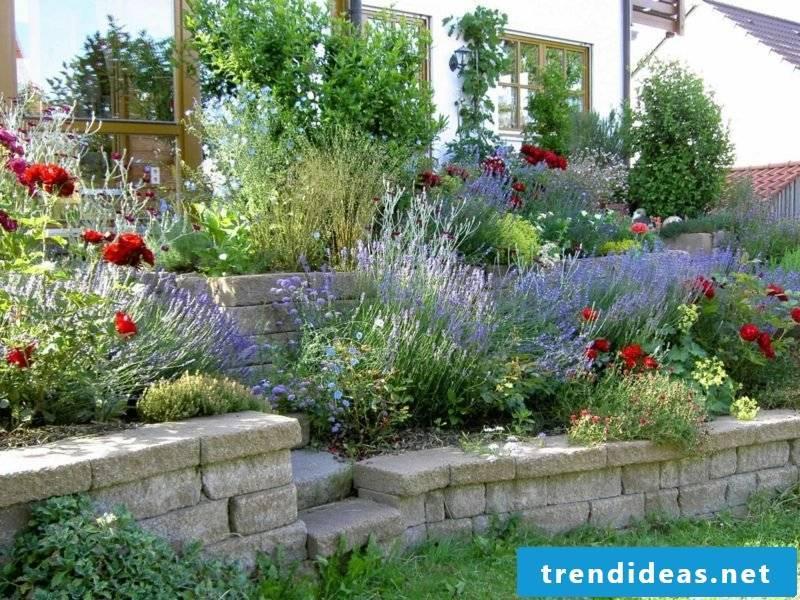 Lavender in the garden landscaping