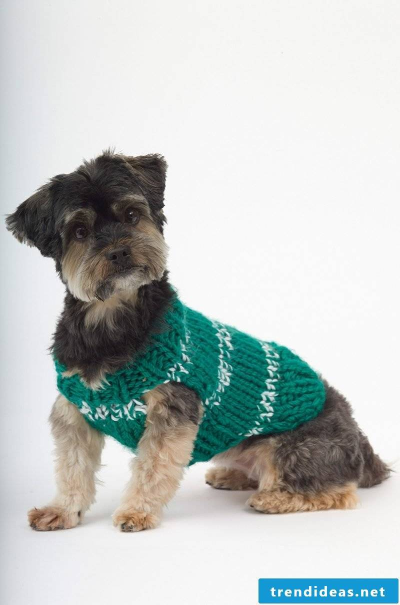 Protect your dog from the cold when knitting a dog sweater