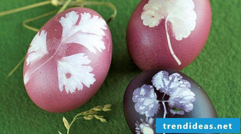 Easter eggs color with natural colors pink and violet