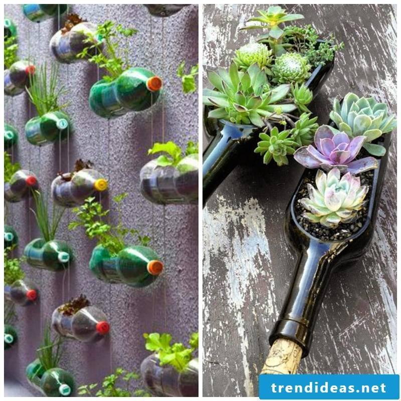 empty bottles as flowerpots