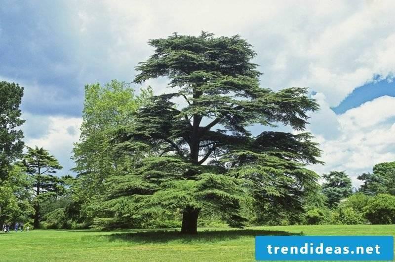 evergreen-baume-plantsand animal
