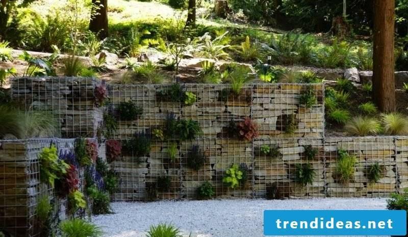 Gabion wall planted