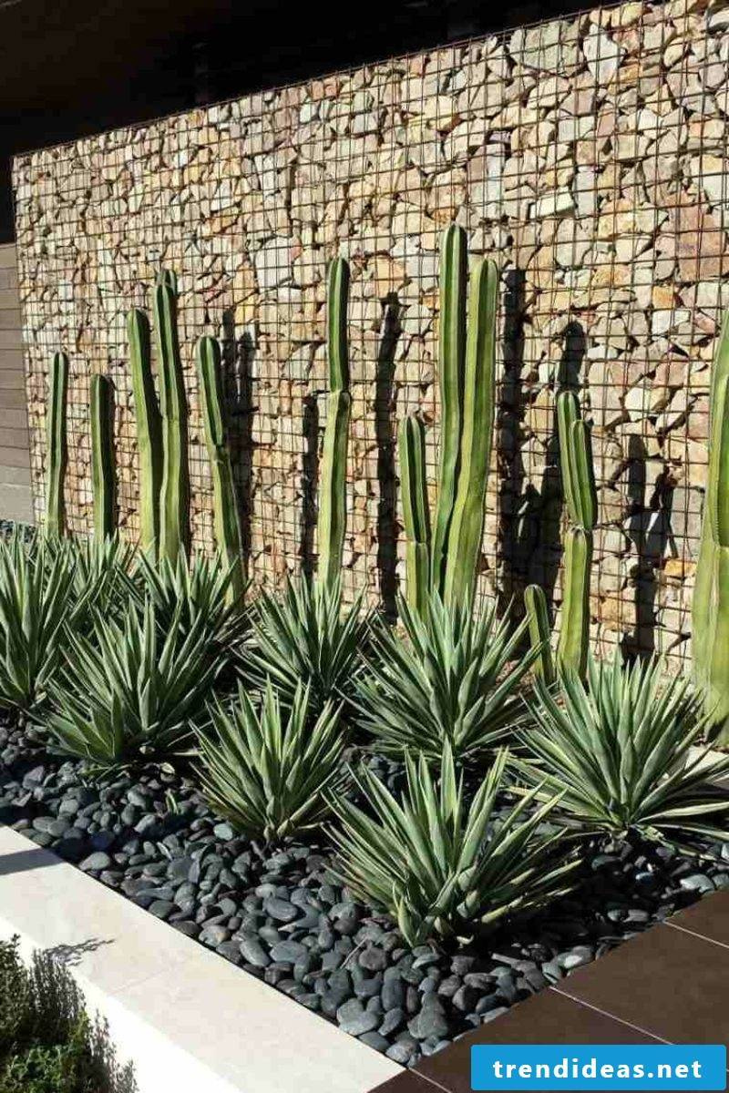 Gabion fence and tropical plants original garden design